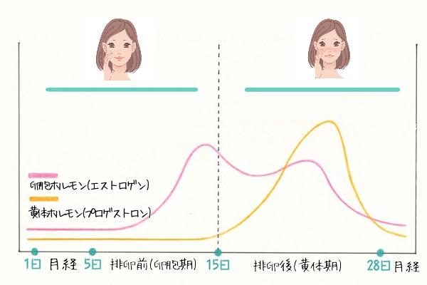 ホルモン周期を説明した画像